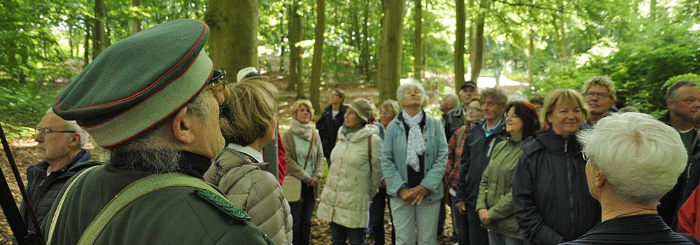 Mittsommer im Heilwald