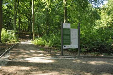Im Heringsdorfer Heilwald