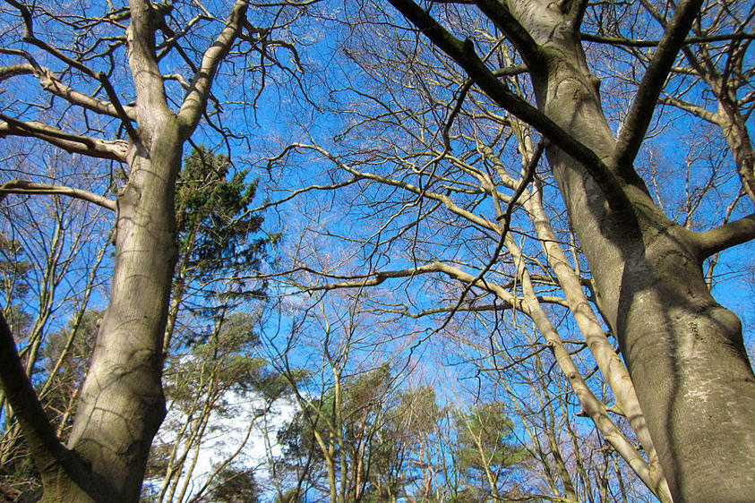 Usedom Bäume