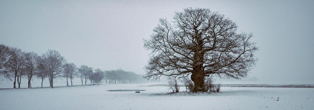 Fotowettbewerb »Mein Freund der Baum«, Heilwald Heringsdorf