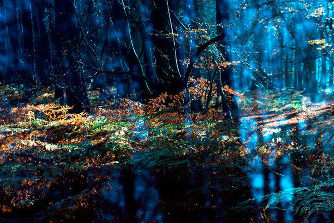 Herbstwald Usedom