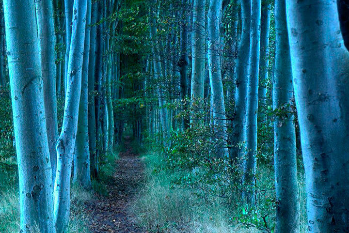 Küstenwald Rügen