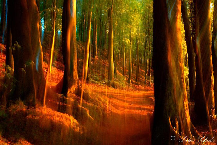 Wald an der Ostseeküste 1