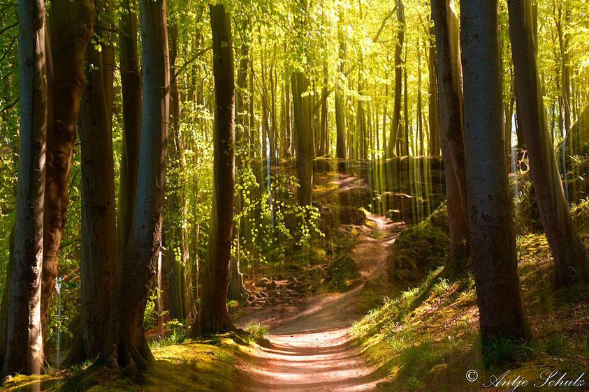 Wald an der Ostseeküste 2