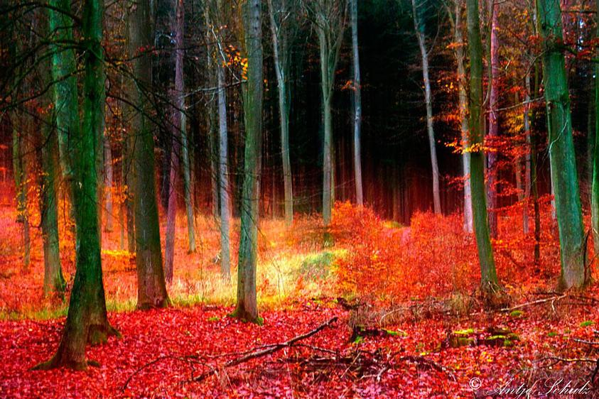 Wald Bansin