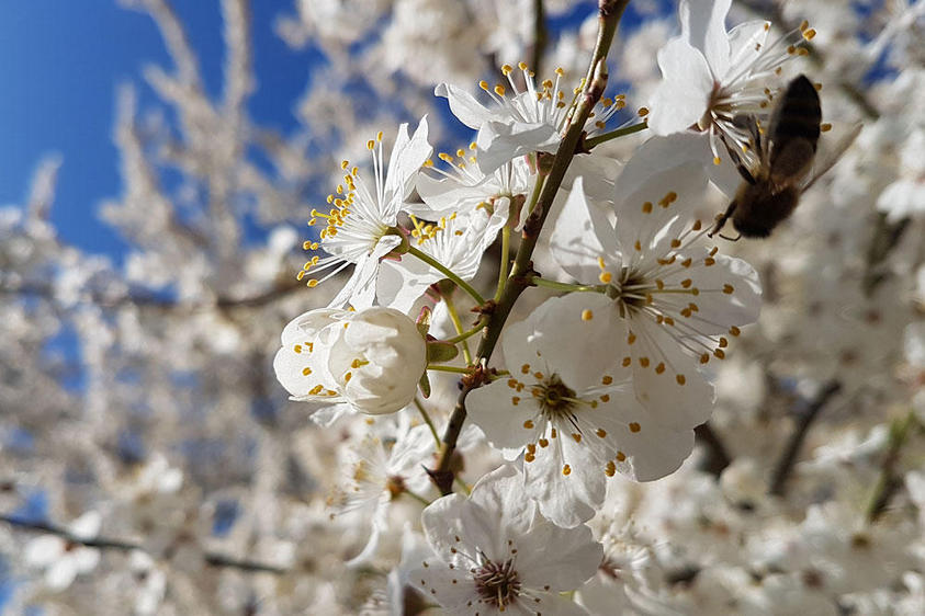 Blütenträume! 2